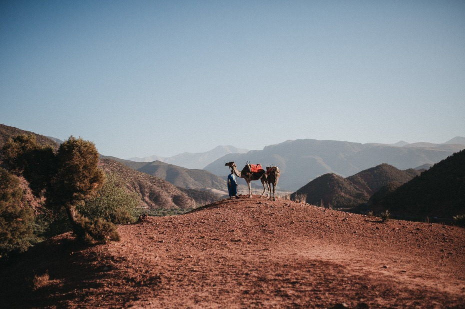 ride a camel at your Moroccan wedding