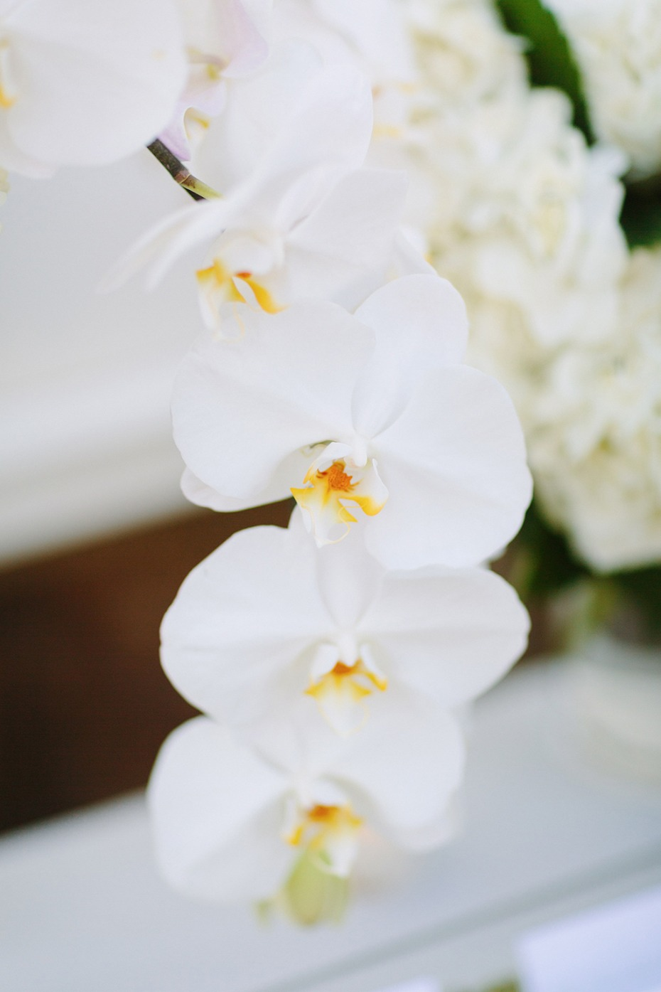 all white wedding orchids