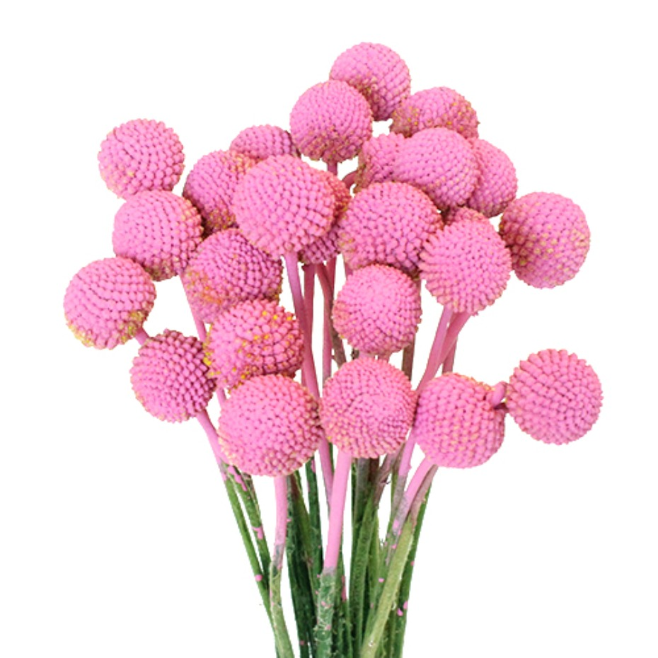 light pink billy balls
