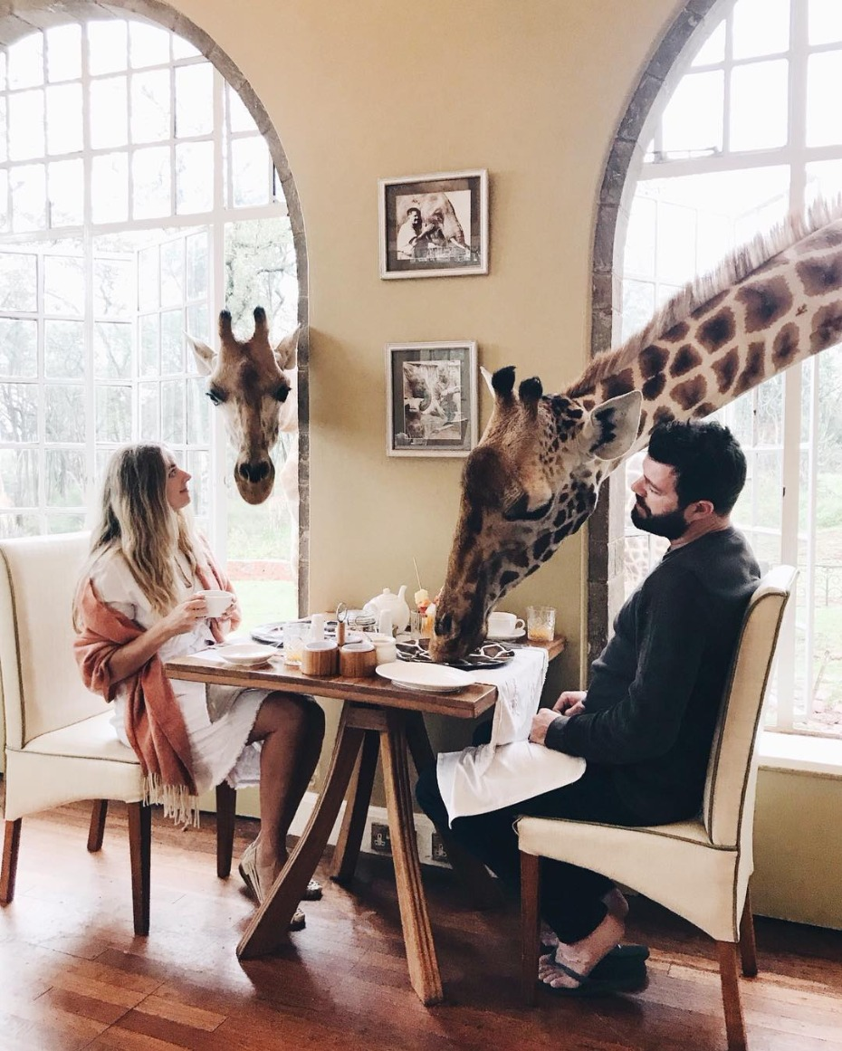 Have breakfast with new friends at Giraffe Manor.