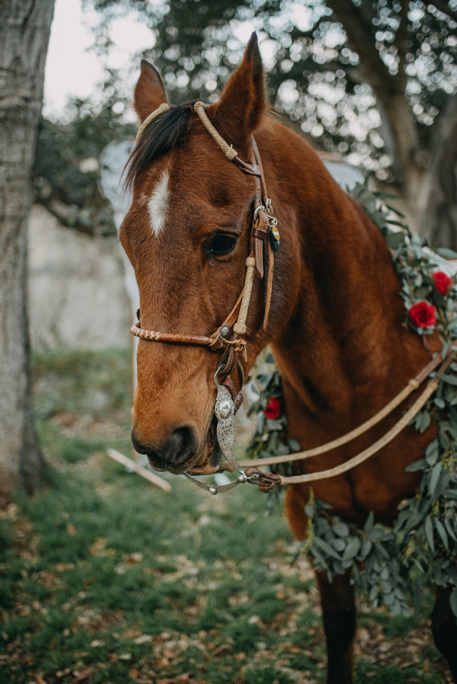 wedding horse with floral wreath