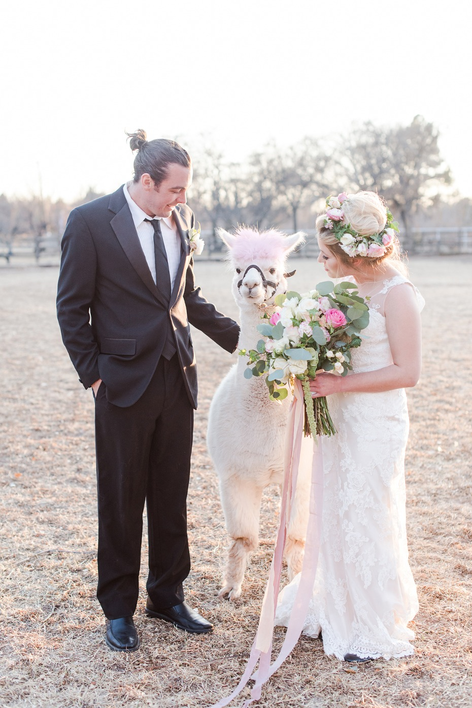 sweet bride and groom and alpaca photo