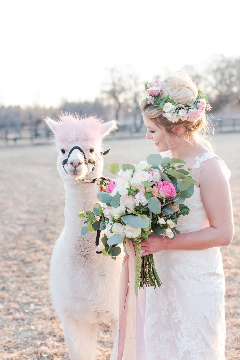wedding alpaca with pink hair