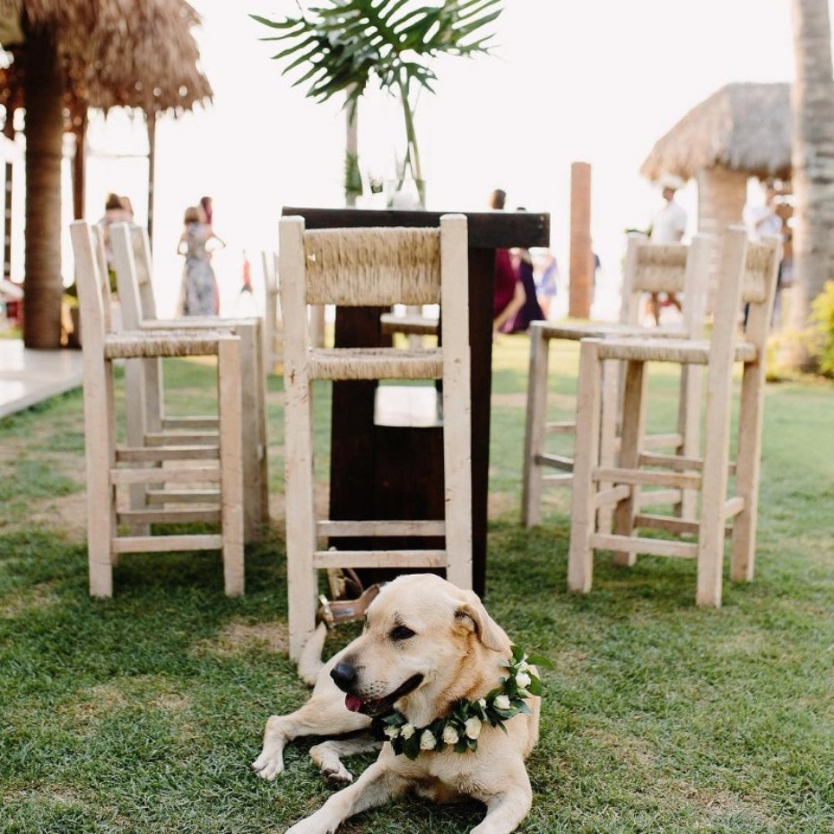 5 Things to Consider Before Having Your Dog at Your Wedding