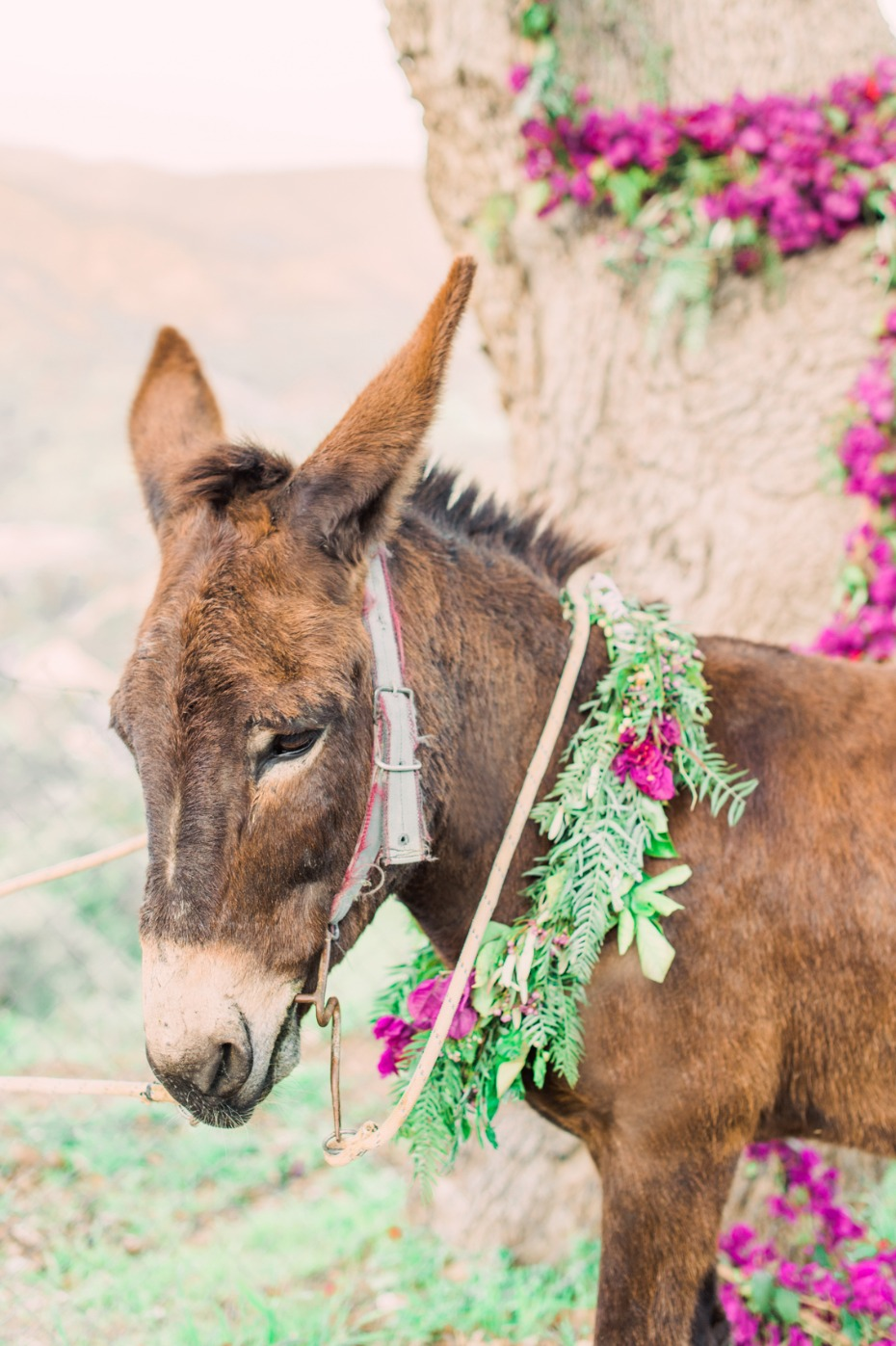 Wedding donkey