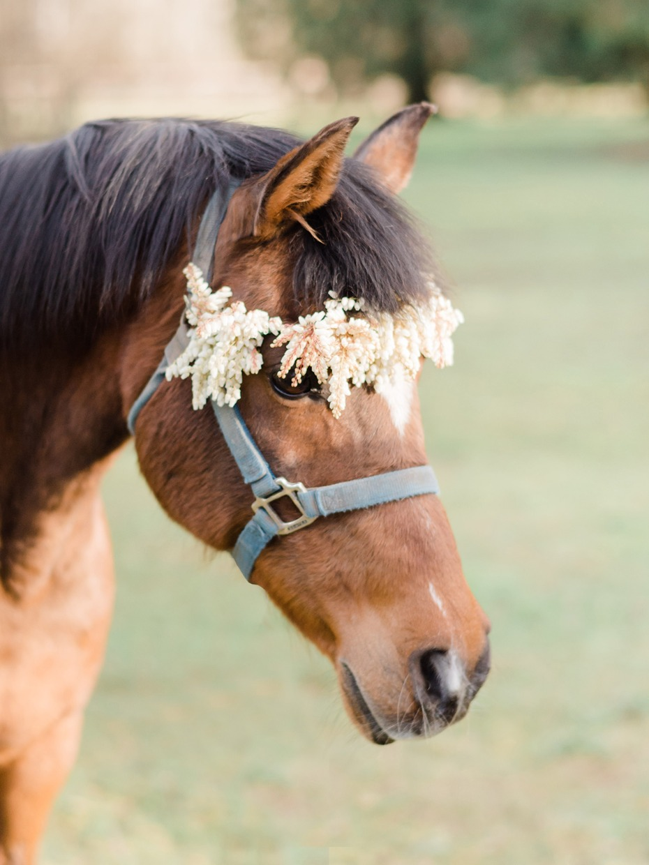 flower crown for your wedding horse