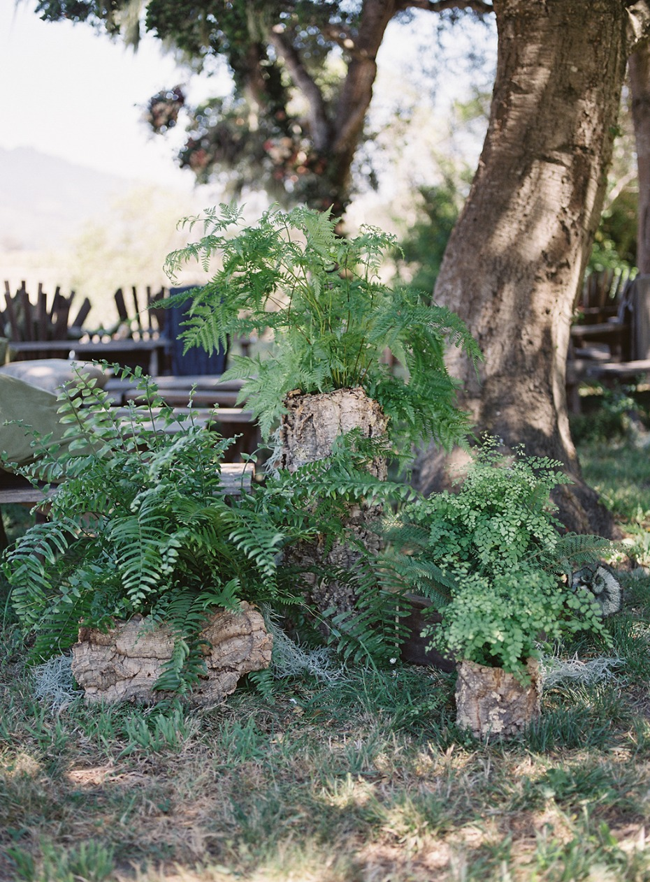 Ferns for your ceremony