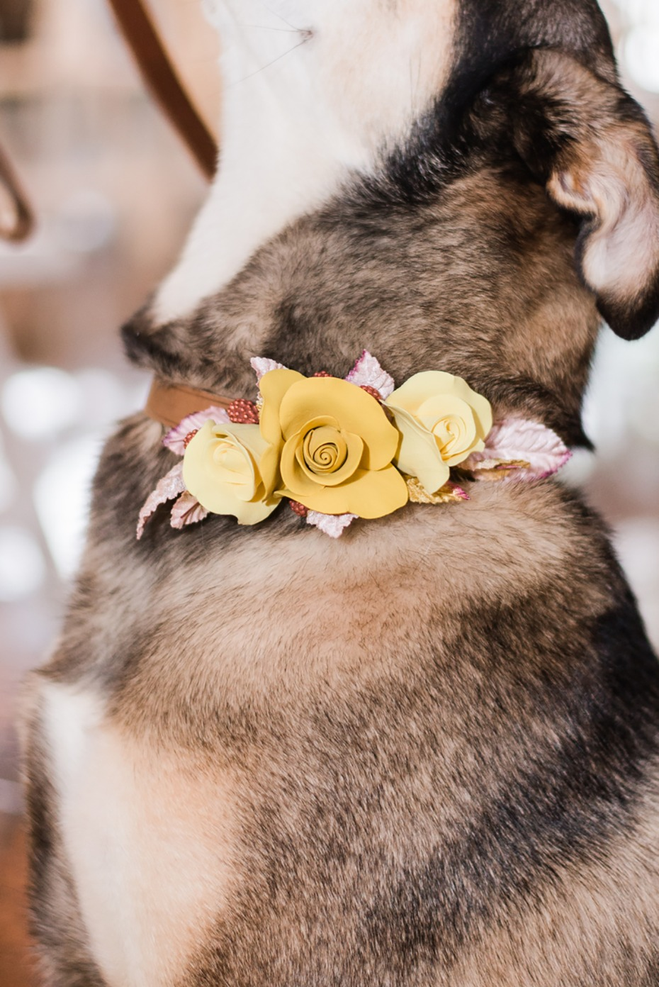 wedding dog wedding collar