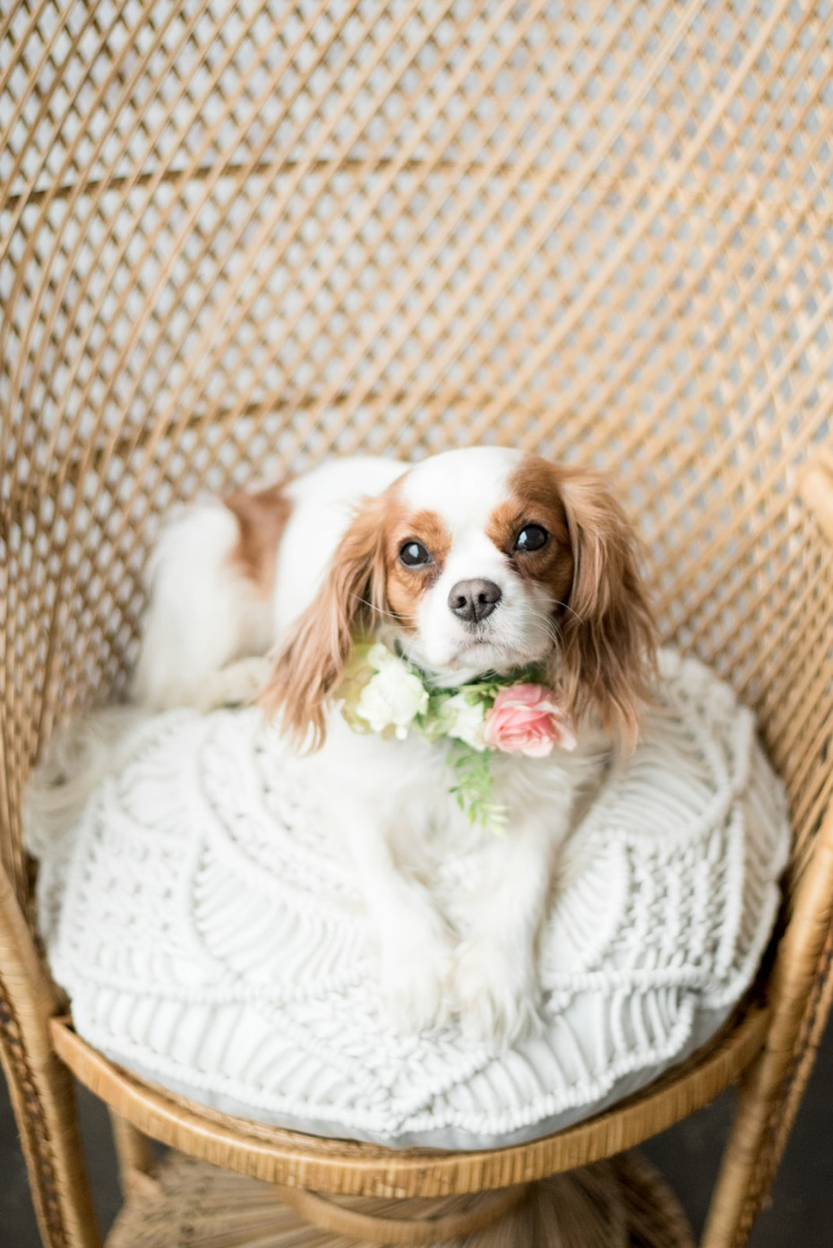 Cute wedding pup!