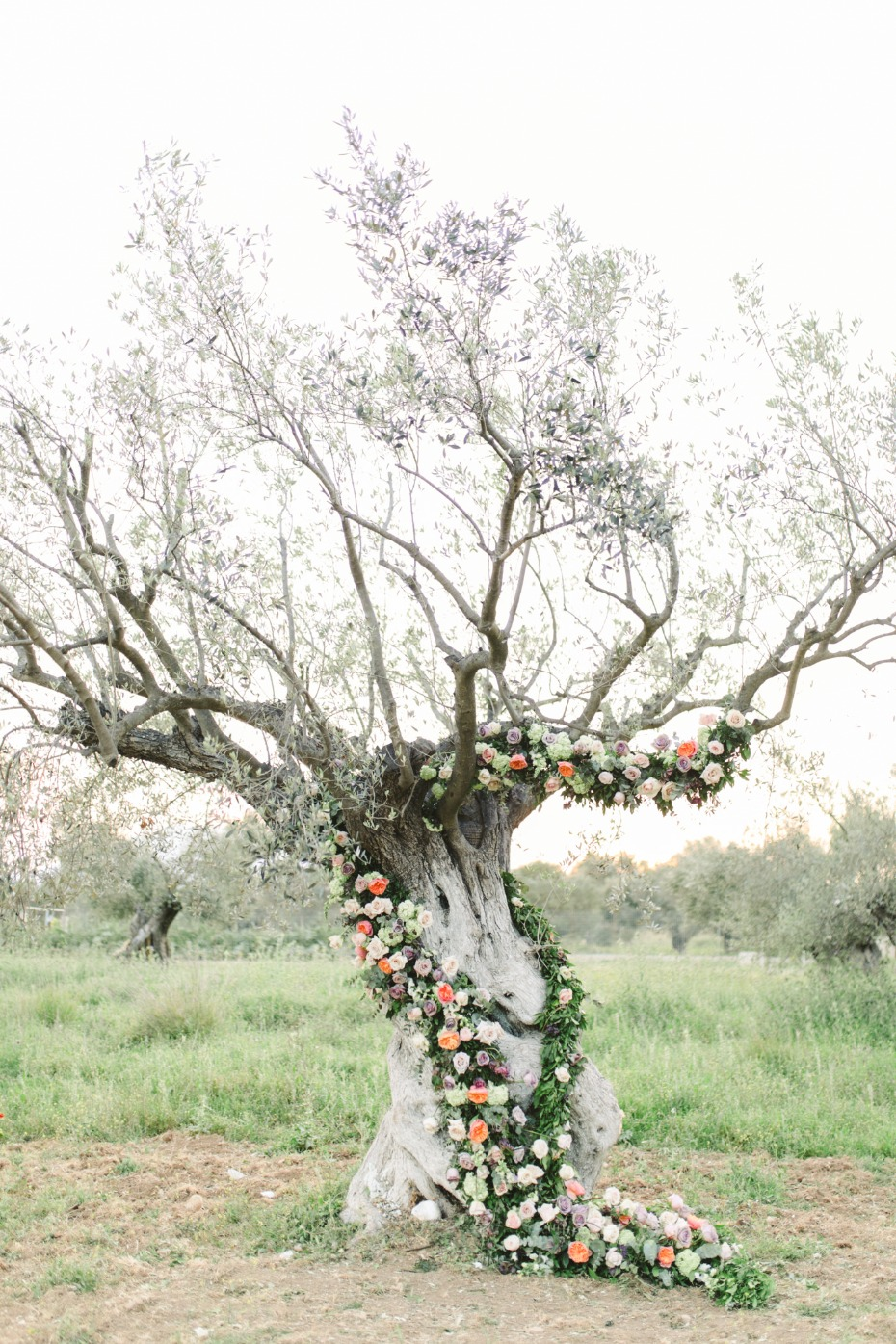 Olive tree ceremony backdrop