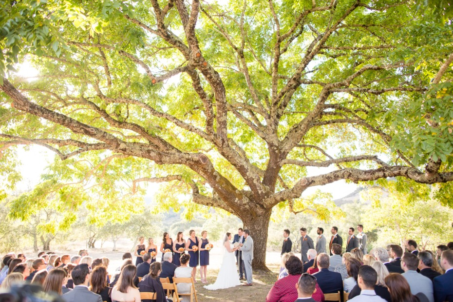 How to Wed Under a 175-Year-Old Walnut Tree in Calistoga California