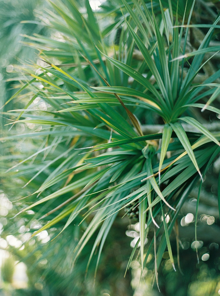 tropical wedding greenery