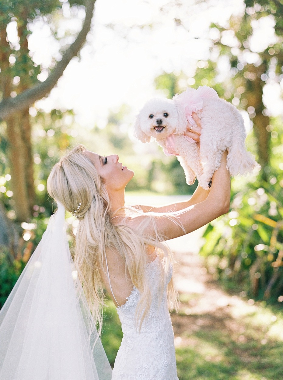 sweet wedding puppy