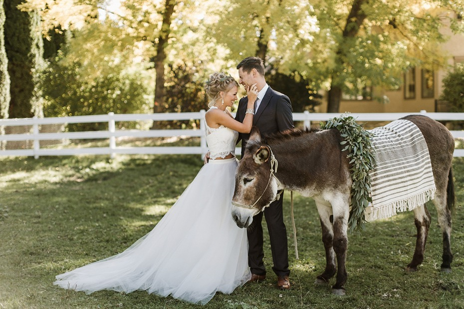 wedding donkey and wedding couple