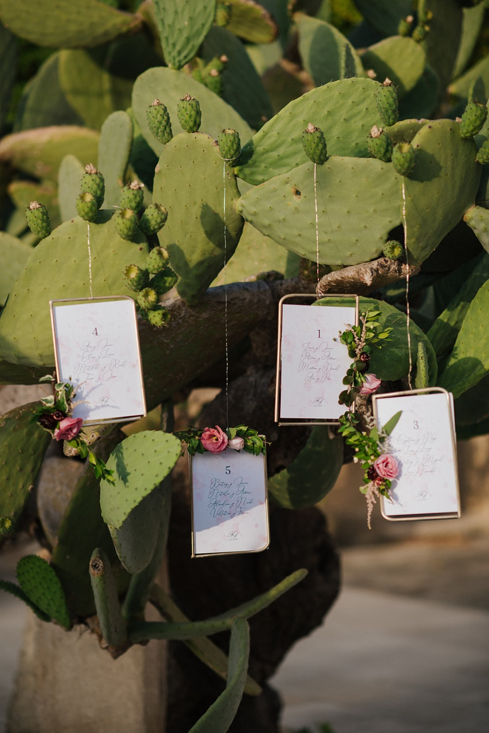 wedding cactus table assignment display