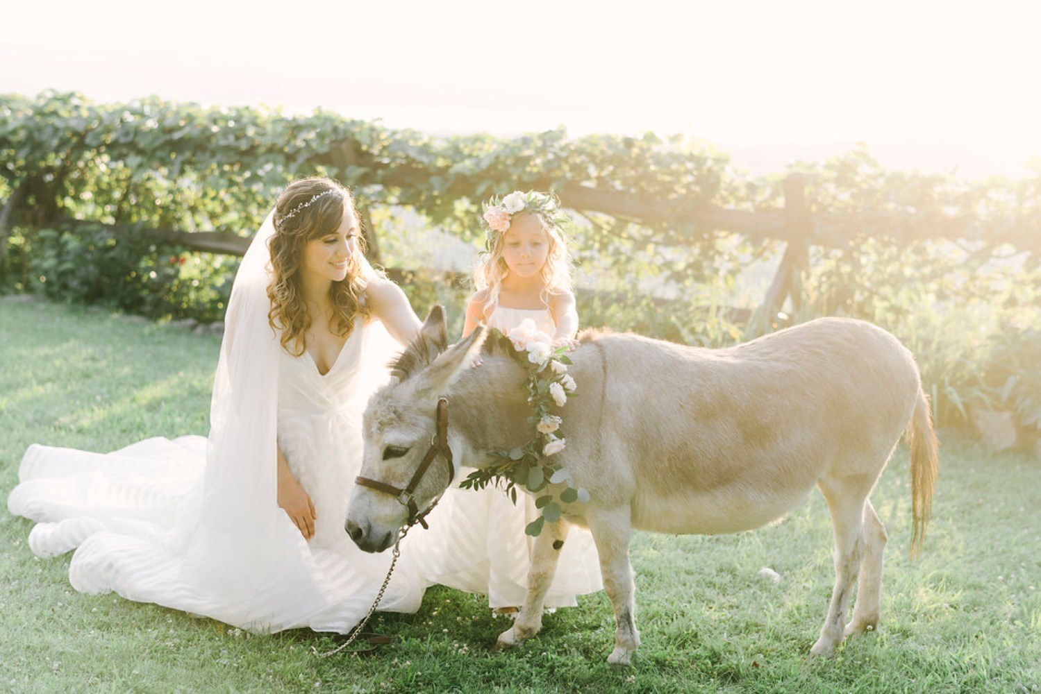Cute wedding donkey
