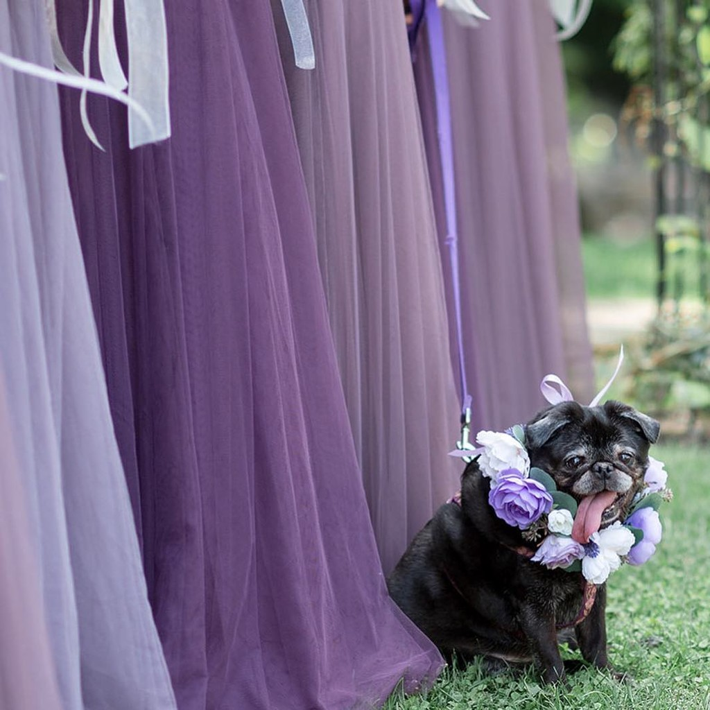The prettiest purple looks to celebrate the perfect puppy love.💜
