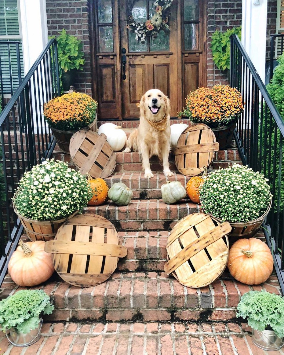 Autumn porch with mums and dog