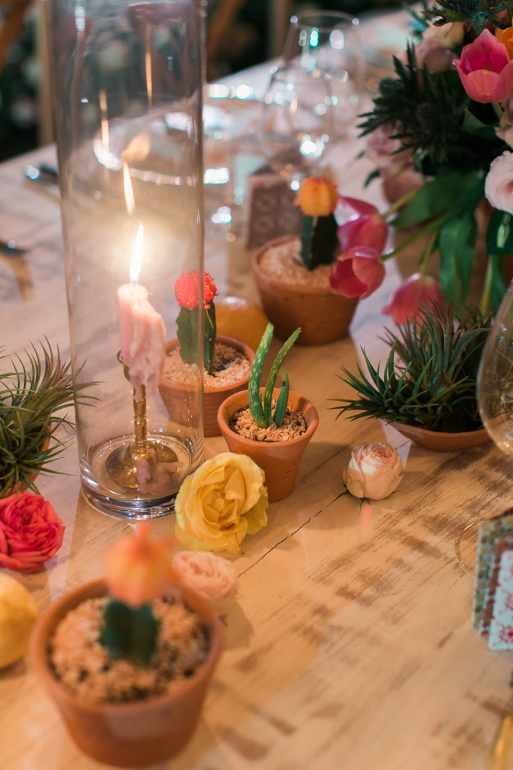 Potted cacti table decor