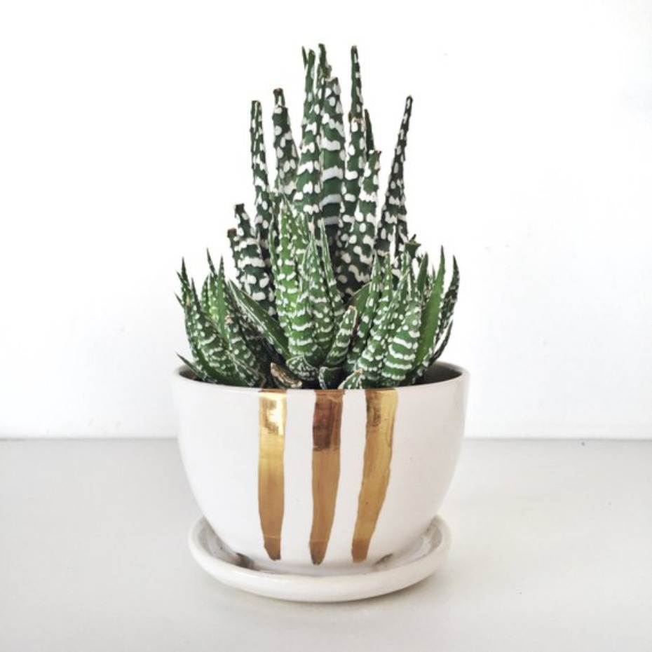 Succulent planter with gold metallic painting