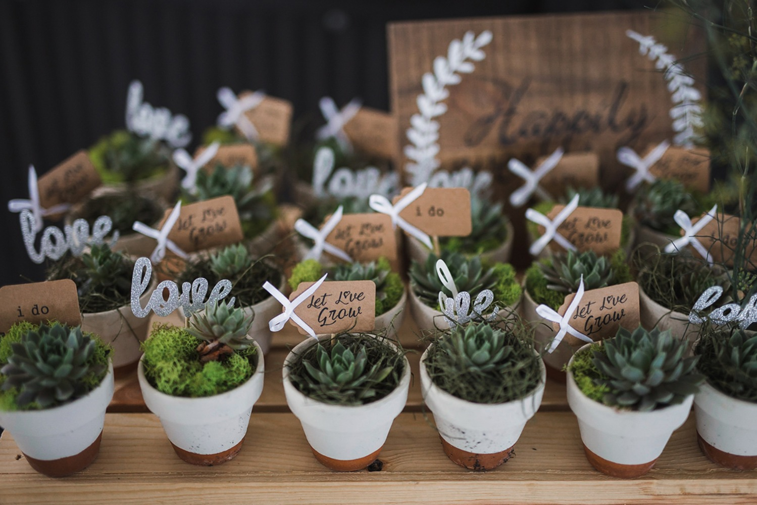 hand potted succulent favors