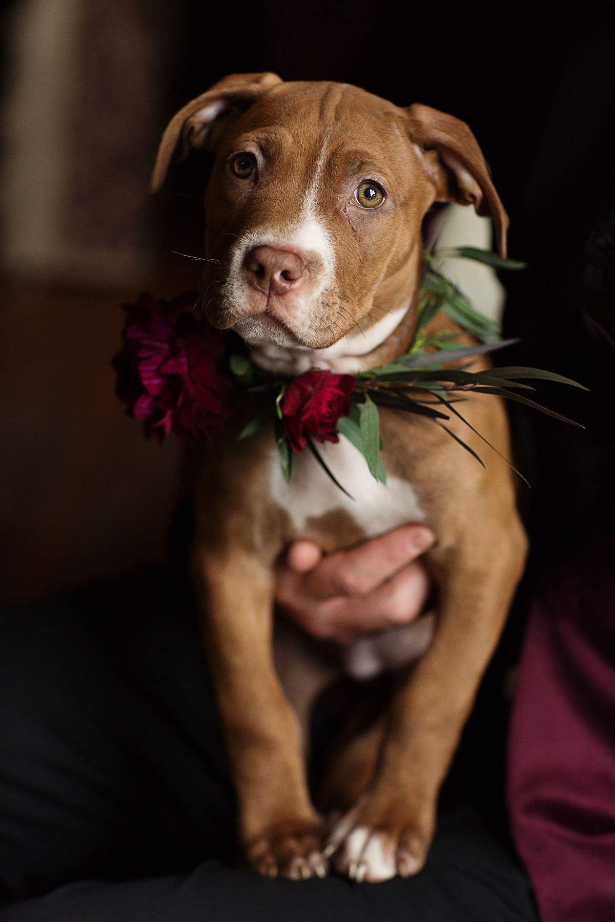 cutest little wedding puppy