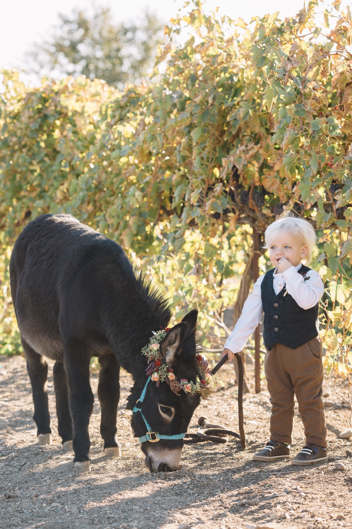 ring bearer and flower donkey