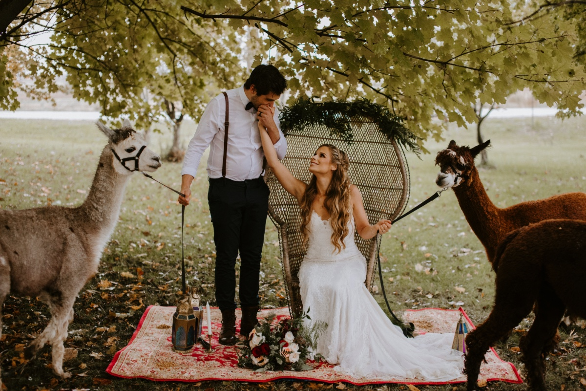 Boho wedding ideas on an Alpaca farm