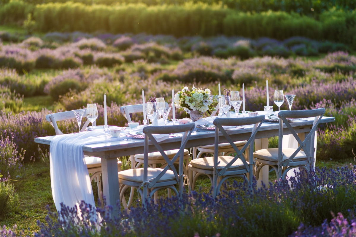 Reception in a lavender field