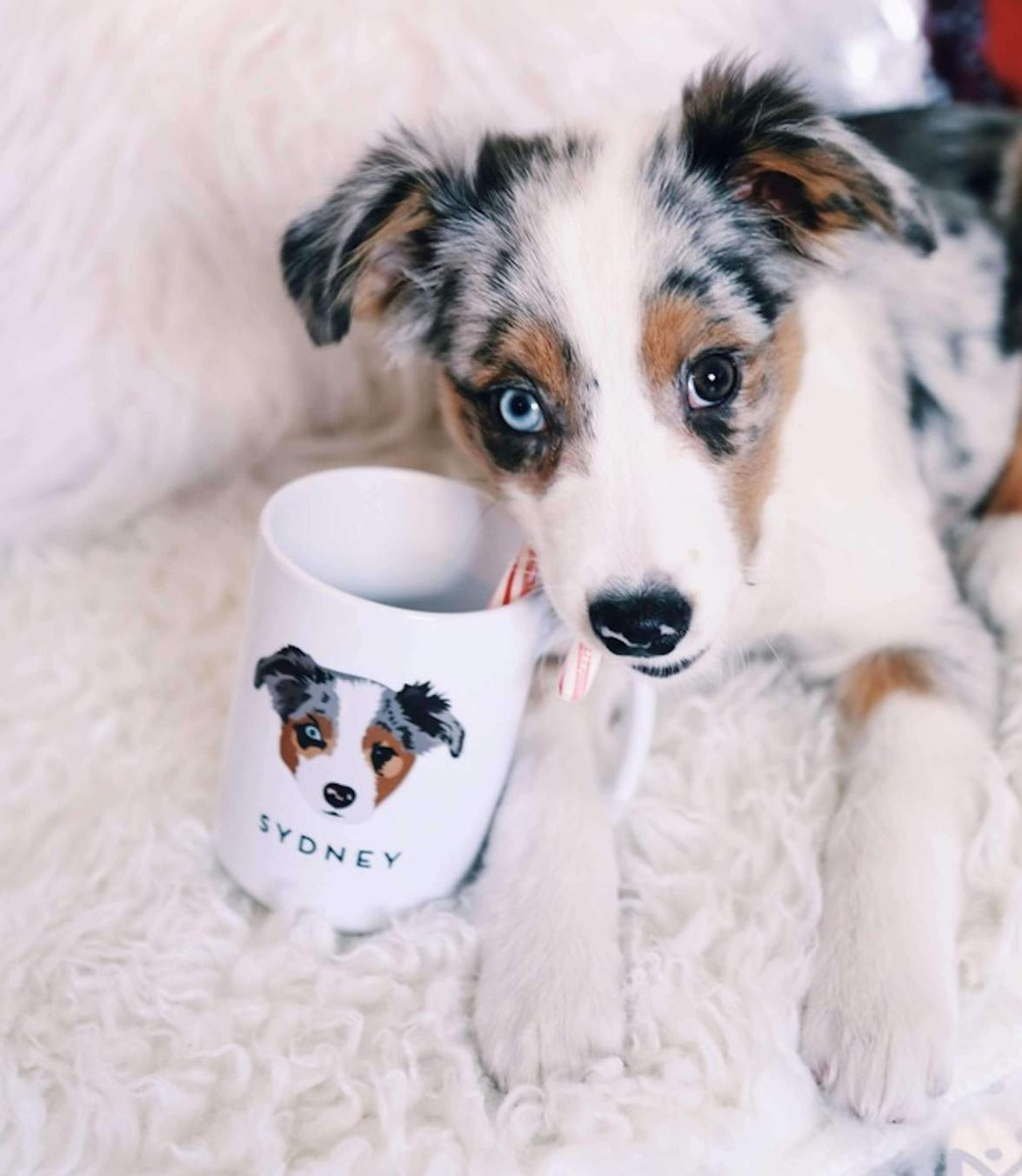 We LOVE a good mug, and this Custom Pet Portrait Mug from Miss Design Berry is the best of both worlds for a coffee obsessed pet lover