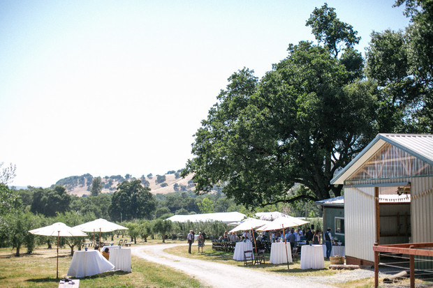 Olive Orchard wedding venue