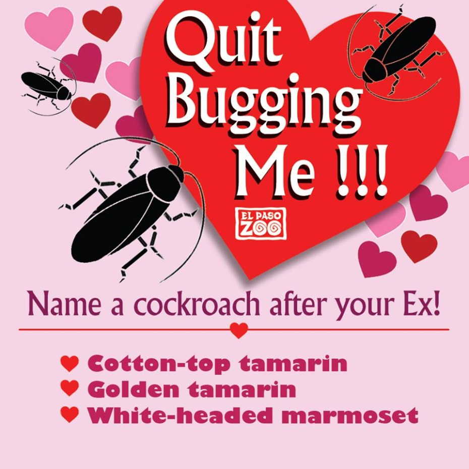 Quit Bugging Me Is the Best Valentine's Day Get-Even Ever