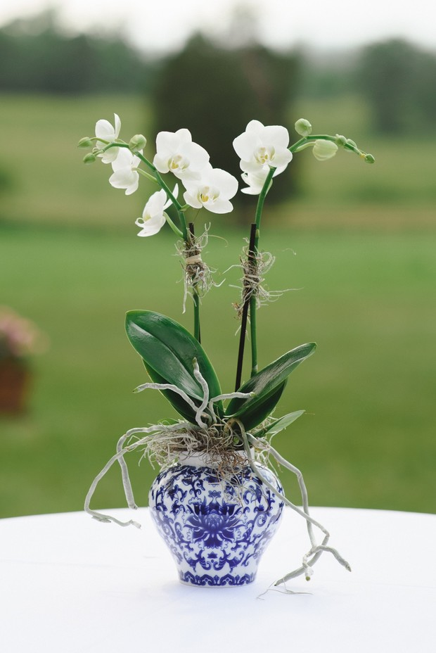 wedding orchids