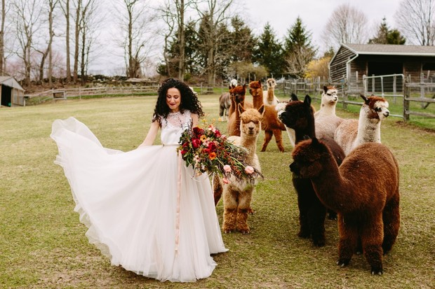 chic wedding style for your alpaca farm wedding