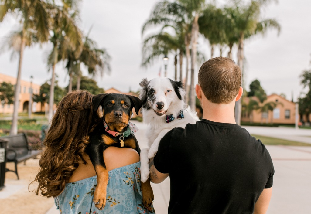 If you are wondering, YES , bring your puppies with you to your engagement session!!!