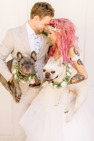 wedding French Bulldogs