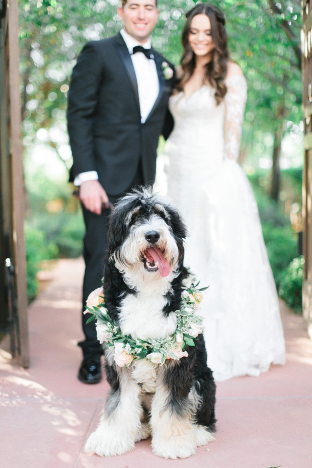 wedding pup with floral collar