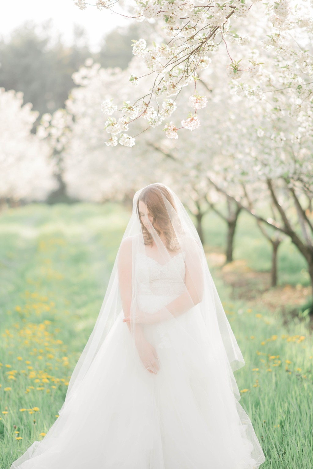 Orchard Wedding Editorial. Wedding dress: Astrid & Mercedes Romance | veil: Noon on the Moon | photography + planning: C&E