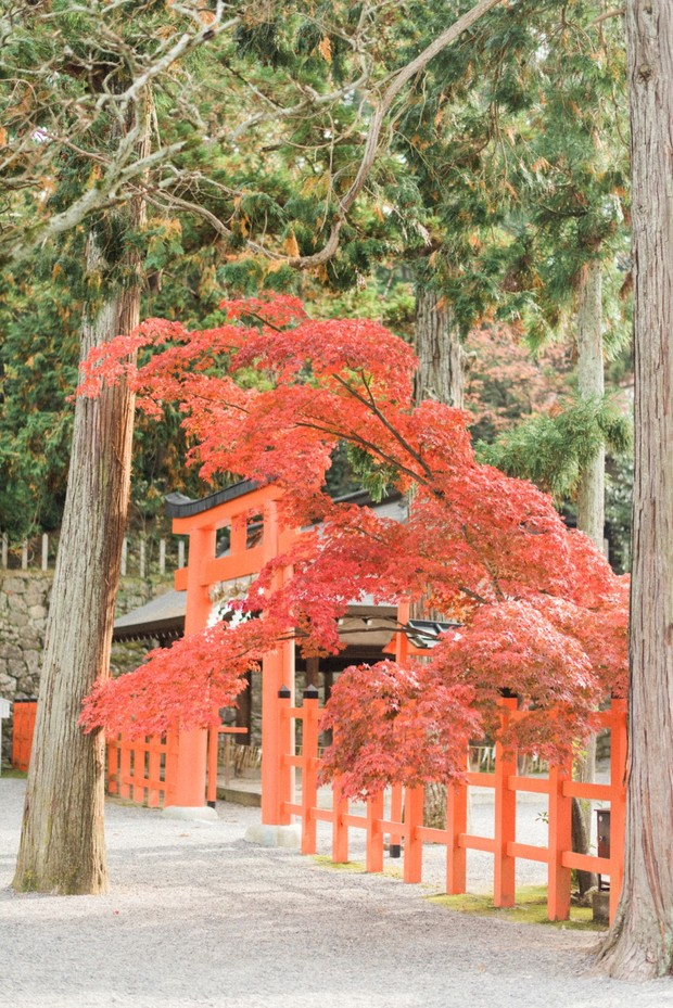 fall at a Shinto temple in Japan