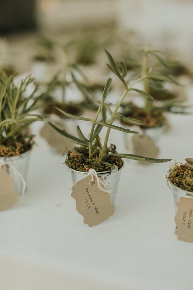 succulent favors and escort cards