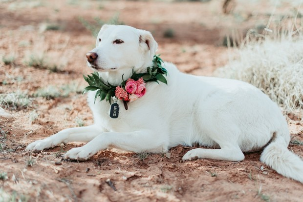 floral wedding collar for dog