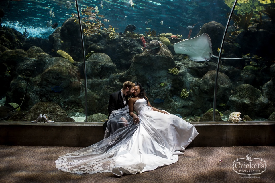 These two love birds got married at the St Pete Aquarium in Florida. What a fun venue that represents another aspect of Florida living