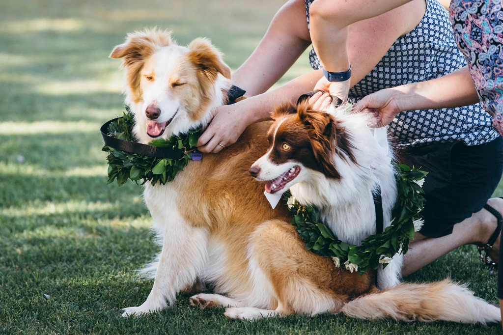 The sweetest wedding dogs with fresh floral lei's. View more of this wedding full of personal features on the blog here: https://brisbanecitycelebrants