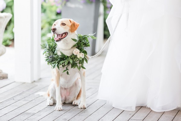 And They Called It Puppy Love Wedding