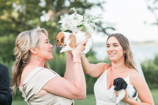 adopt a wedding puppy