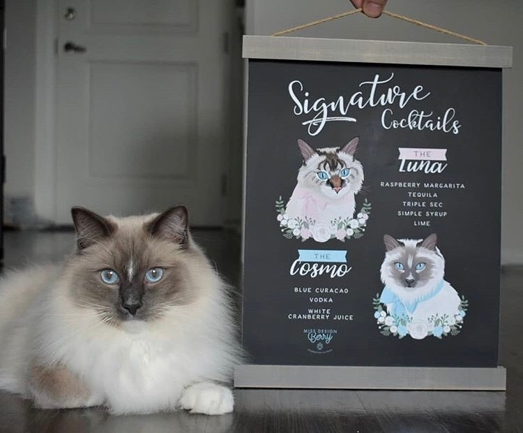 We love this photo from @twocanadianragdolls with
