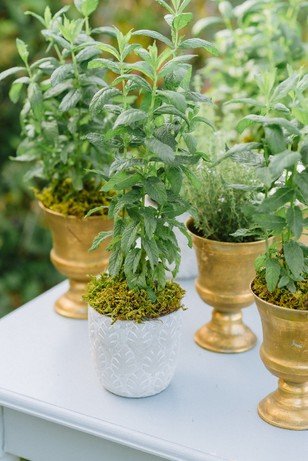 live wedding herbs