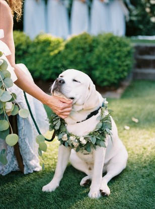 sweet puppy wedding ring bearer