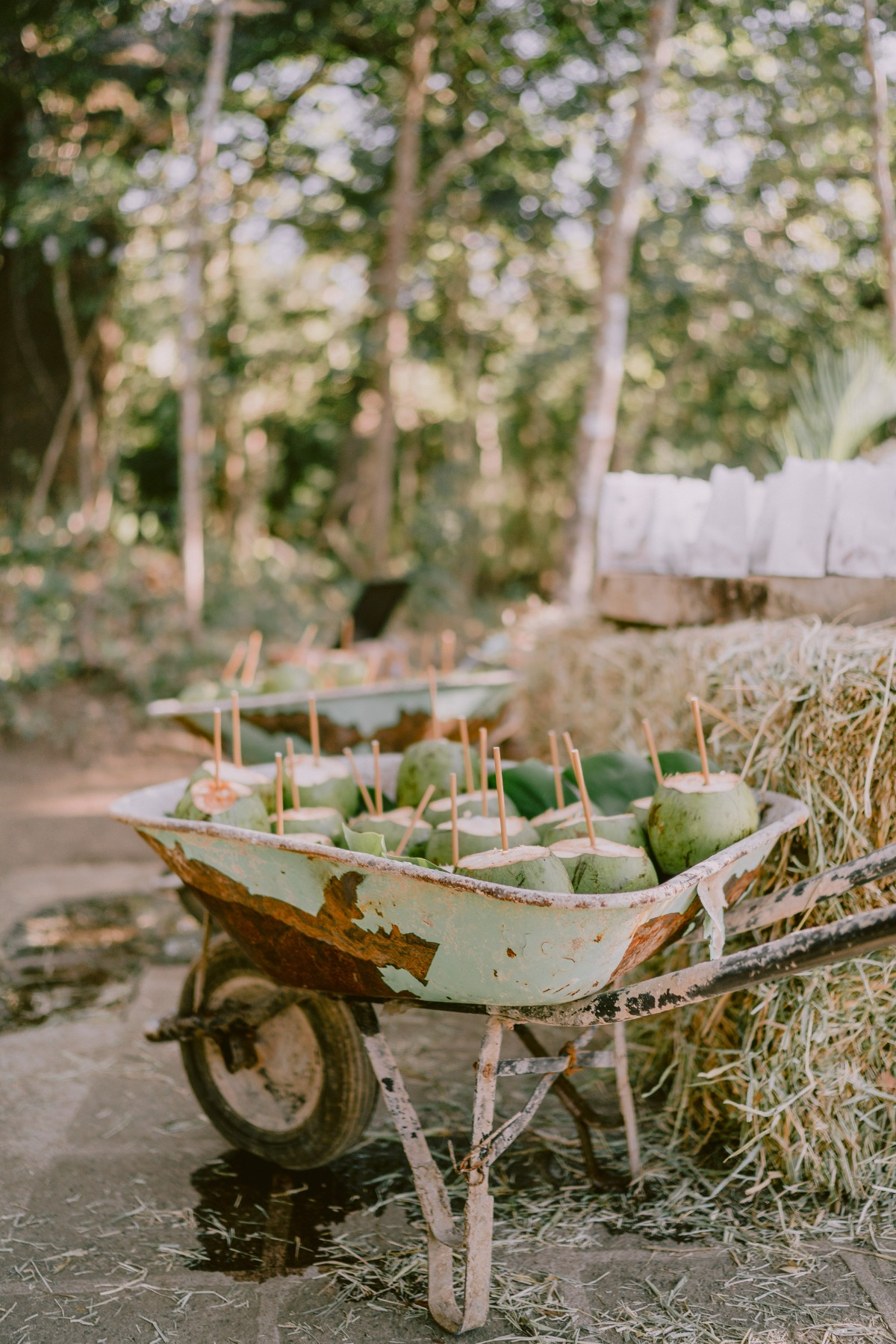 fresh coconuts with straws