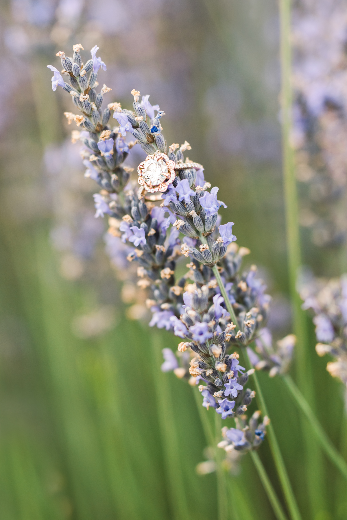 Engagement ring styling ideas on lavender